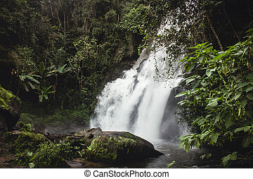 長的暴露, ......的, 給人深刻印象, 瀑布, 偷看, 透過, 酒, 綠色的植物, 在, mae, klang, luang., chiang mai, thailand.