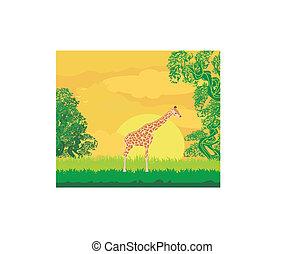 長頸鹿, 在, 叢林, 風景