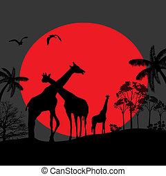长颈鹿, 家庭, 侧面影象, 在中, 非洲