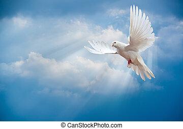 開いた, 翼, 鳩, 広く, 空気