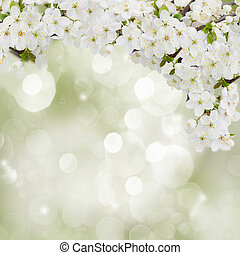 開くこと, プラム, 花, 中に, 庭