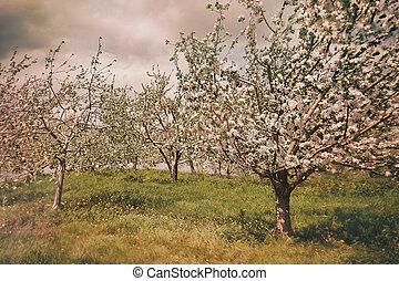 開くこと, 春, 果樹園, アップル