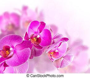 開くこと, 花, ラン