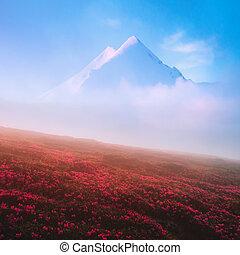 開花, 杜鵑花, 在, the, 高山