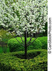 開花, 樹