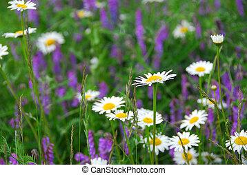 開花, 草地