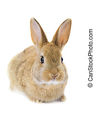 關閉, 兔子