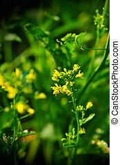 關閉, ......的, bok choy, 總數, 花, 蔬菜, 在, 花園, 新鮮, 有机, 蔬菜, 園藝, 增長, 黃色, 植物, 大白菜, 花