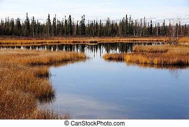 阿拉斯加, 北極, 沼澤地