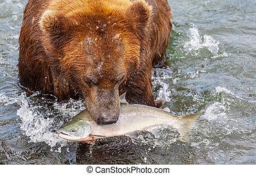 阿拉斯加, 熊