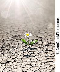 陸地, 新, 干旱, 生活