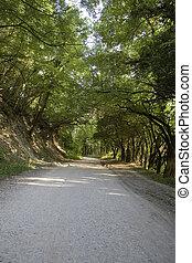 陽光普照, 森林路徑