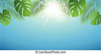 陽光普照, 背景, 棕櫚葉, 天, 夏天