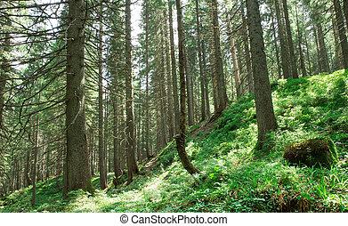 陽光, 綠色, 背景, 樹。, 木頭, 自然, 森林
