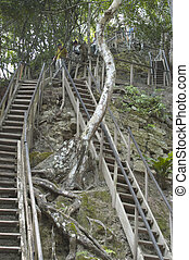 階段, mayan, 寺院, tikal