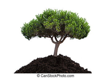 隔离, 在怀特上, 树, 同时,, 种植, 在中, the, 地面