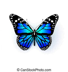 隔离, 蝴蝶, 在上, a, 白色