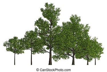 隔離された, イラスト, 木, 白, 3d, 横列