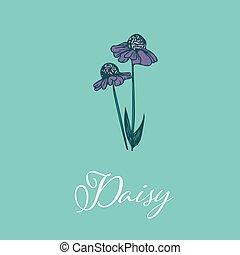 隔離された, デザイン, デイジー, オブジェクト, 野生の 花