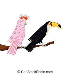 隔離された, ブランチ, ピンク, toucan, アイコン, オウム
