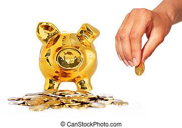 隔離された, 上に, white., 銀行, 小豚