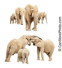 隔離された, 家族, 象