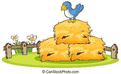 隔離された, 映像, 青, 干し草, 鳥