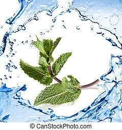 隔離された, 水, はね返し, 緑の白, ミント
