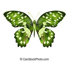 隔離された, 白い背景, 水彩画, 蝶