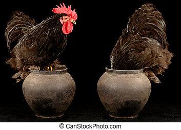 雄ん鶏, 2