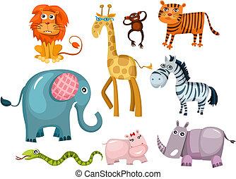 集合, 動物