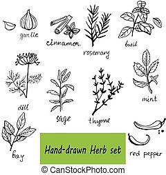 集合, 手, 藥草, 矢量, 背景, 畫, 香料