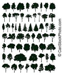 集合, 樹