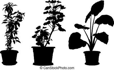 集合, ......的, 不同, 植物, 在, 罐