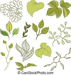 集合, ......的, 不同, leaves., a, 矢量, 插圖