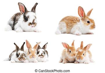 集合, ......的, 嬰孩, bunny, 兔子