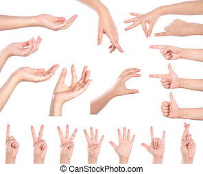 集合, ......的, 很多, 不同, 手, 被隔离, 在上方, 白色 背景