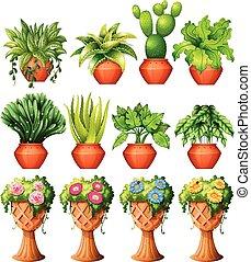集合, ......的, 植物, 在, 罐