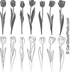 集合, ......的, 矢量, tulips.