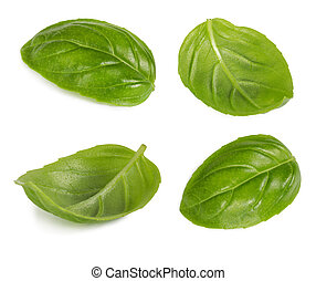 集合, ......的, basil, 葉子, 被隔离, 在懷特上