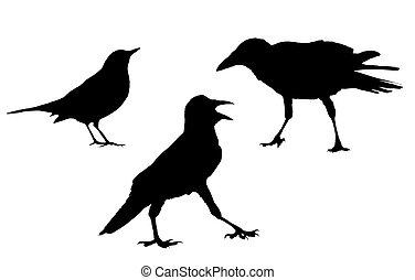 集合, 鳥, 黑色半面畫像