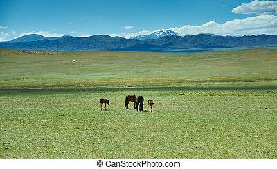 雌馬, かわいい, 子馬, 風景, mongolian, 牧草地
