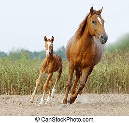 雌馬, そして, 子馬