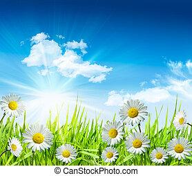 雏菊, 同时,, 草, 带, 明亮的蓝色, 天空