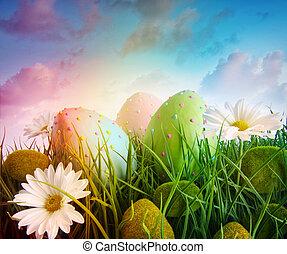 雏菊, 蛋, 彩虹, 天空, 颜色, 草, 大