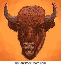 雕刻, 古董, 頭, 北美野牛, 插圖