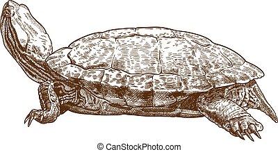 雕刻, 海龜, 池塘, 插圖, 滑軌