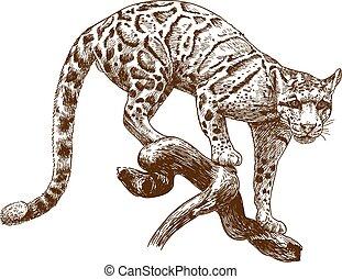雕刻, 豹, 圖畫, 插圖, 被籠罩