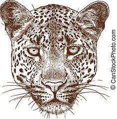 雕刻, 豹, 插圖, 臉