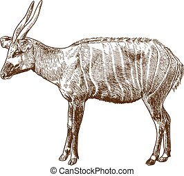 雕刻, bongo, 羚羊, 插圖, 圖畫